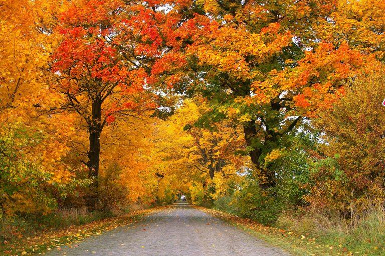 fall foliage WNC